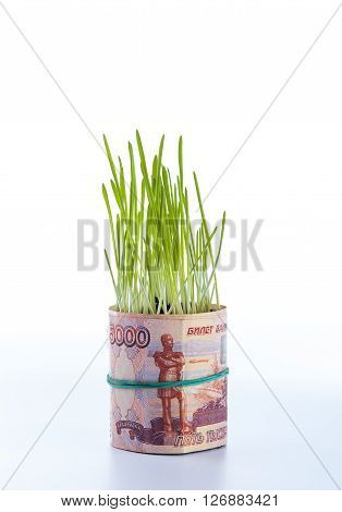 Russian ruble bill and green grass on white background. Financial concept.