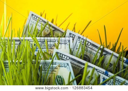 Investment growth: dollar bills in green grass. Financial concept.