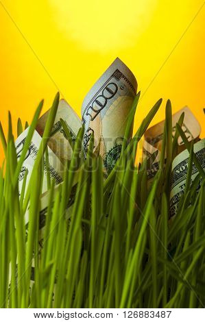 Dollar bills growing in the grass. Financial concept.