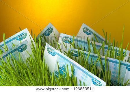 Ruble bills among green grass. Appreciation of russian currency. Financial concept.
