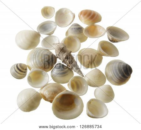 Collection of Seashells on Isolated White Background