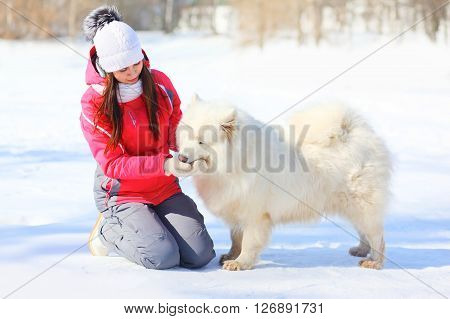 Woman Owner Feeding White Samoyed Dog With Hands In Winter Park