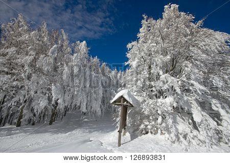 Italy, Tuscany, National Park Of The Casentino Forests, Mount Falterona, Campigna