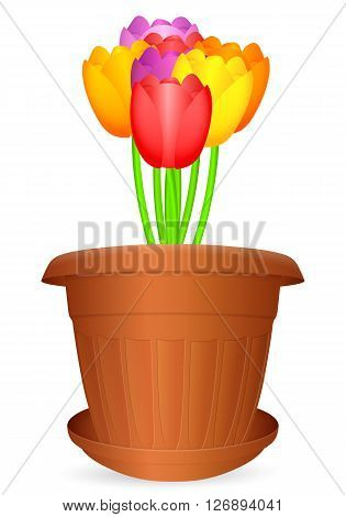 Flowerpot bouquet tulips on a white background. Vector illustration.