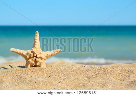 Starfish In Sand On The Sea Side