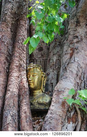 The head Buddha in the Bodhi Tree
