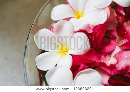 Plumeria and rose petals in the tub,Shallow depth of field with focus on Plumeria.