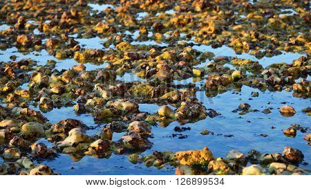 Texture Of Rocks In Seawater During Low Tide In Fecamp, France
