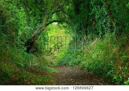 Footpath In A Green Oak Tree Tunnel In Brittany, France