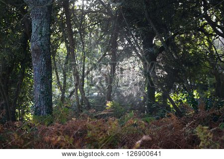 Deciduous Forest View With Ferns And Sun Shining Through The Leaves