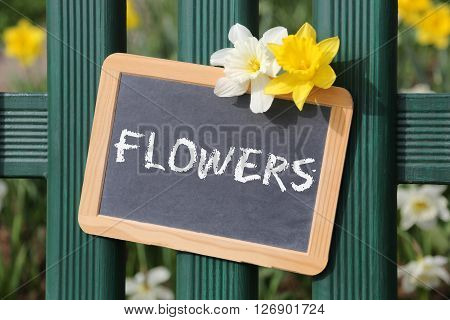 Flowers Flower Daffodil Daffodils Spring Garden With Sign Board