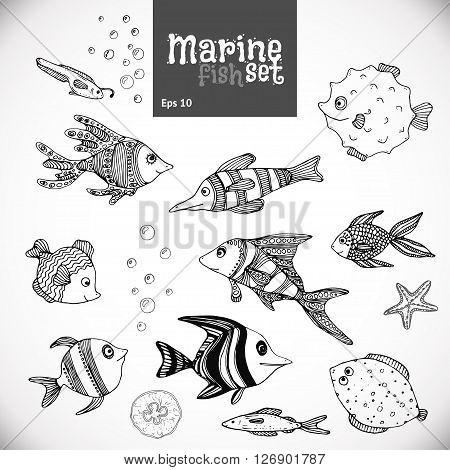Marine set on blackboard background. Hand drawn. Tropical fish, sea fish. Vector