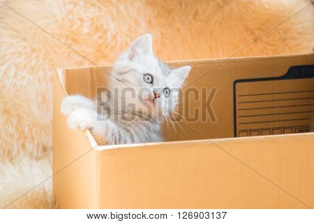 Close up of cute kitten hide and looing from paper box.