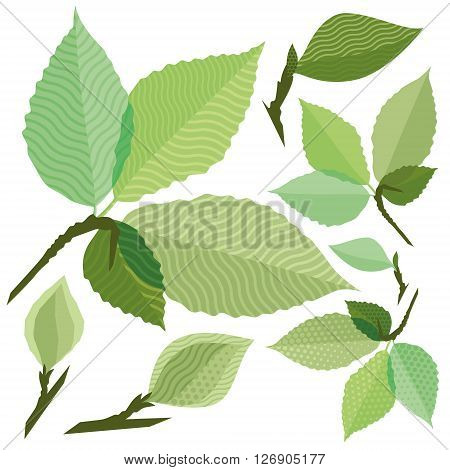Isolated green leaf of the tree without gradient