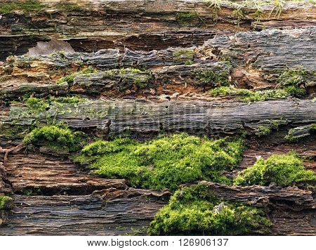 The moss on the tree bark. The texture of old wood and moss