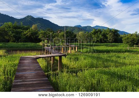 Wooden walk way on rice green field mountain background