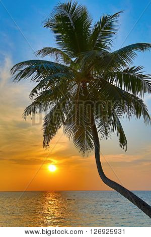 Palm on the Maldivian beach at sunset