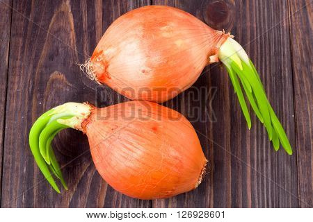 Sprouted spring onions isolated on wooden background.