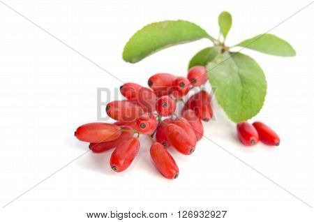 ripe barberries isolated on white background. two berries are separately
