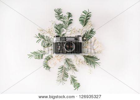 Flat lay. Vintage retro photo camera yellow mimosa and green brunches