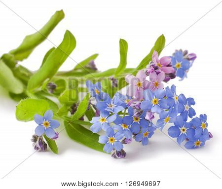 Bouquet of spring flowers on a white background .Forget-me-not