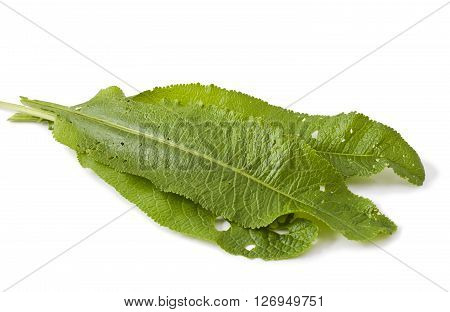 leaves horseradish isolated on a white background