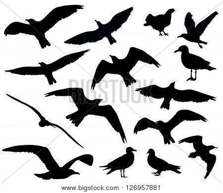 Set Of Birds Silhouettes 15 In 1 On White Background. Vector Illustration