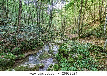 Italy, Udine, San Leonardo del Friuli - Rio Patok in the middle of forest