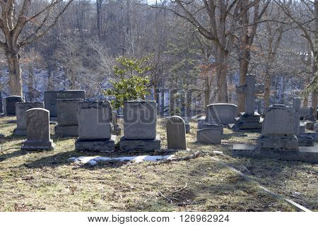 An old graveyard with tombstones in winter amonst the trees and lingering snow