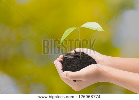 Tree In Hand Isolate On Blur Background With Clipping Path,concept For Global Warming Or Green Energ