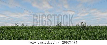3d rendering of green grass field