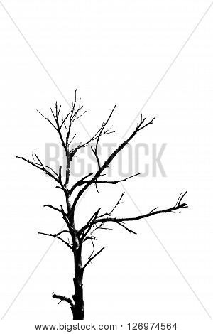 Silhouette, dead tree, isolated on white background