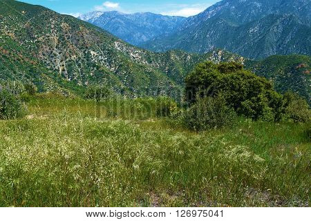 Lush mountain meadow with green chaparral grasslands and Mt Baldy beyond taken in the San Gabriel Mountains, CA
