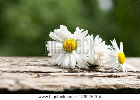 Bouquet Of Daisy Flowers Against Nature Background/ Summer Garden Background