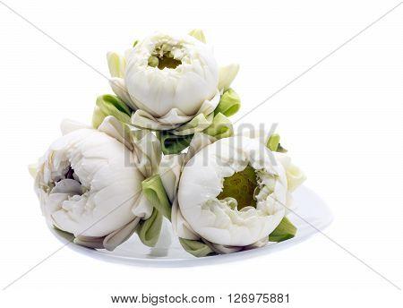 three white lotus flower on white background