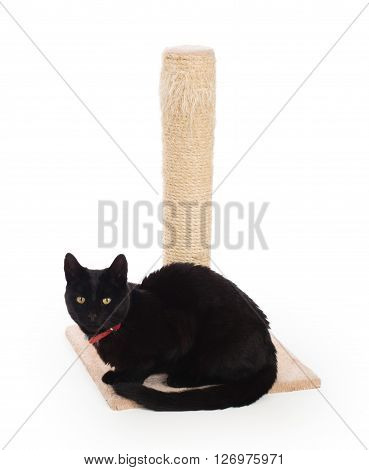 Black Cat With A Scratching Post