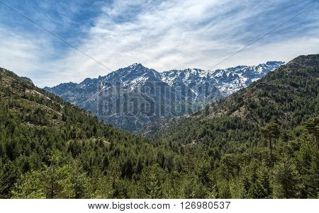Snow Capped Mountain And Pine Forest In Corsica