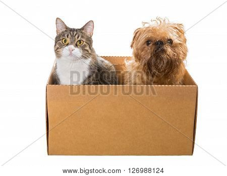 Cat and the dog sitting in a cardboard box isolated