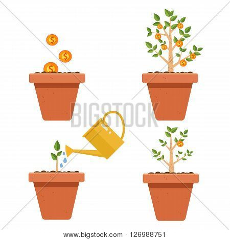 Evolution of money tree.Financial growth concept,Money growth, making money, investment, profit, financial management concept