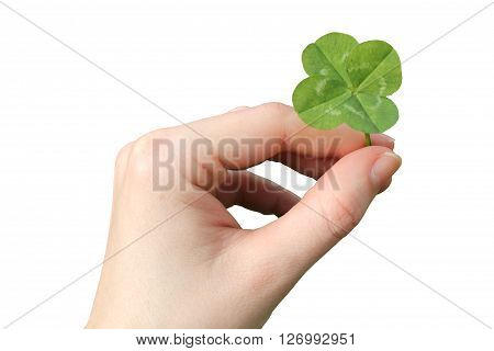 Hand with a four-leaf clover isolated on white background.
