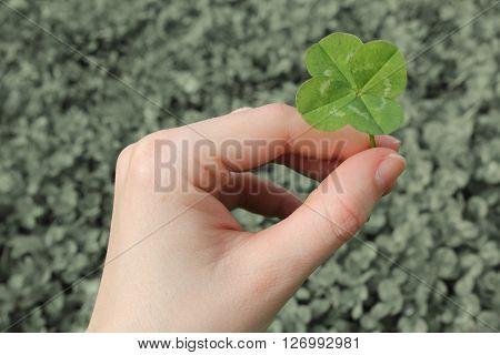 A hand holding a four leaf clover.