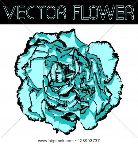 Vector Clove Flower With Cyan Petals And Black Edging. Vector Illustration