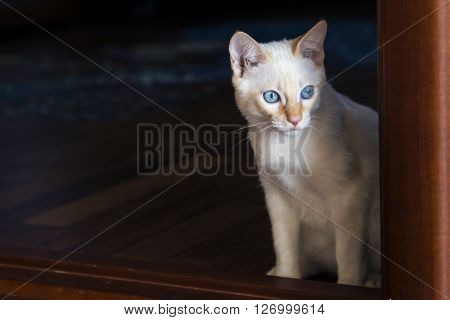 Young little cat watching to the right