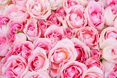 stock photo of pink roses  - big bunch of multiple pink roses from top - JPG