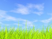 Fresh Green Grass On Blue Sunny Sky Background poster