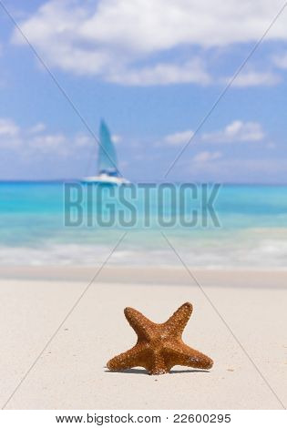 Star Shore Dream