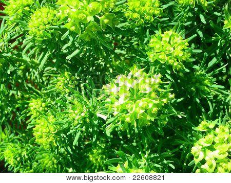 Summer_green