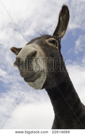Funny Pouting Jackass Or Donkey