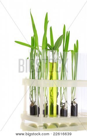 plants in test-tubes