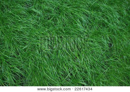 Nice soft grass